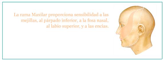 Cirugia y Rehabilitacion Orofacial